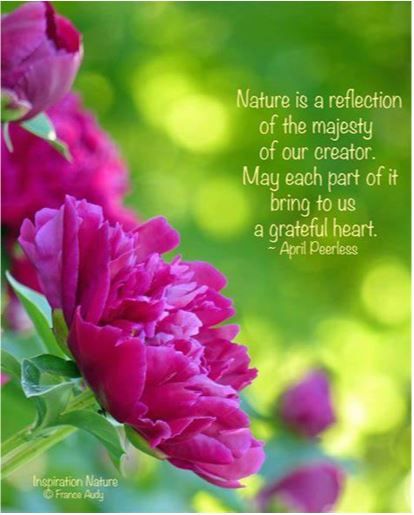 Nature is a reflection of the majesty of our creator. May each part of it bring us to a grateful heart. - April Peerless